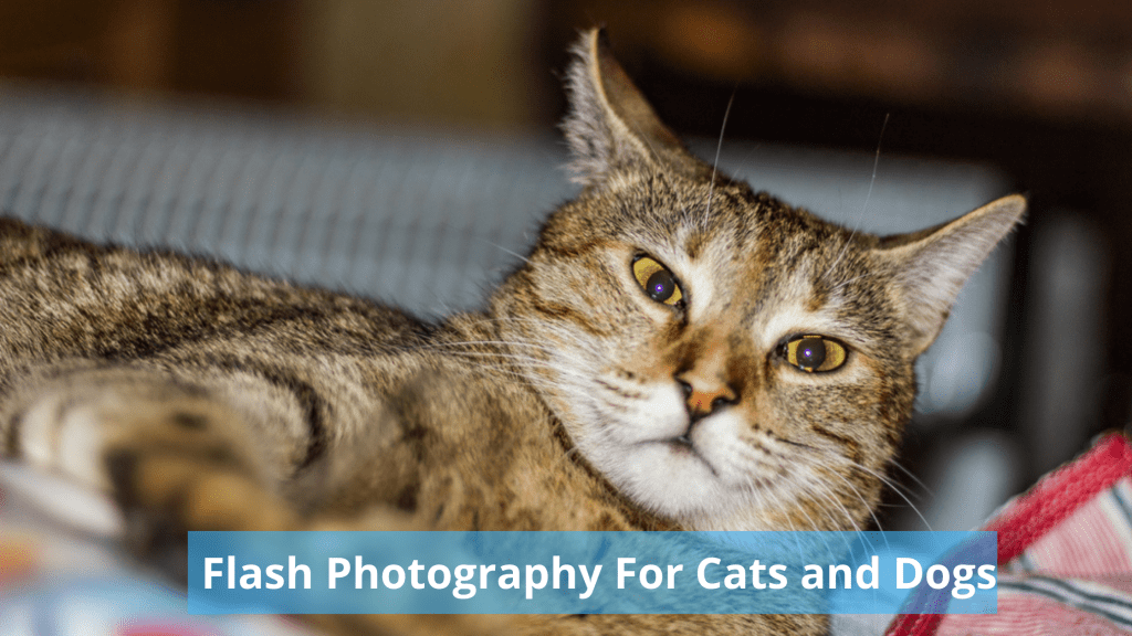 Can Flash Photography Really Damage Cats and Dogs Eyes?